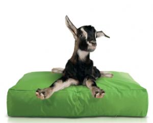 auf den hund gekommen wie es zum sitzsack f r hunde kam sitzsack sitzkissen blog. Black Bedroom Furniture Sets. Home Design Ideas