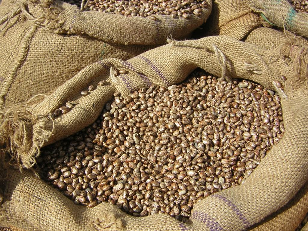 """Hier hat die klassische """"Bean Bag"""" ihren Namen her: Bohnen als Füllung"""