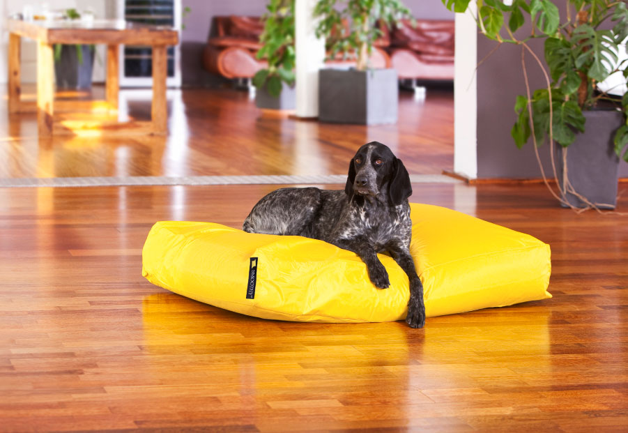 Dogbed Classic XXL
